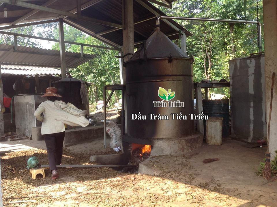 Bán dầu tràm Huế đảm bảo nguyên chất ở Huế